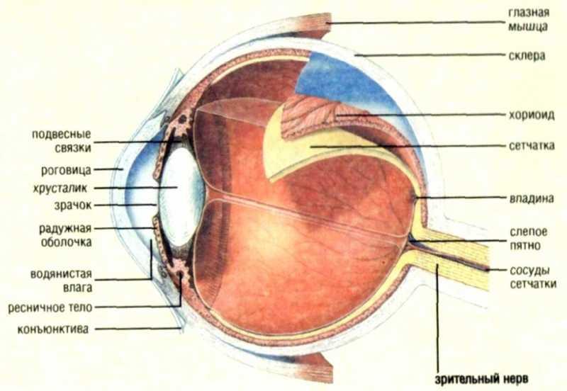 5)О пользе стрельбы для зрения и не только...