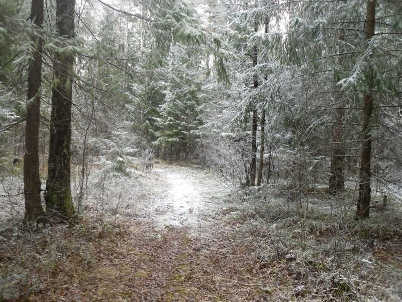 7)Воскресенье в Брянском лесу