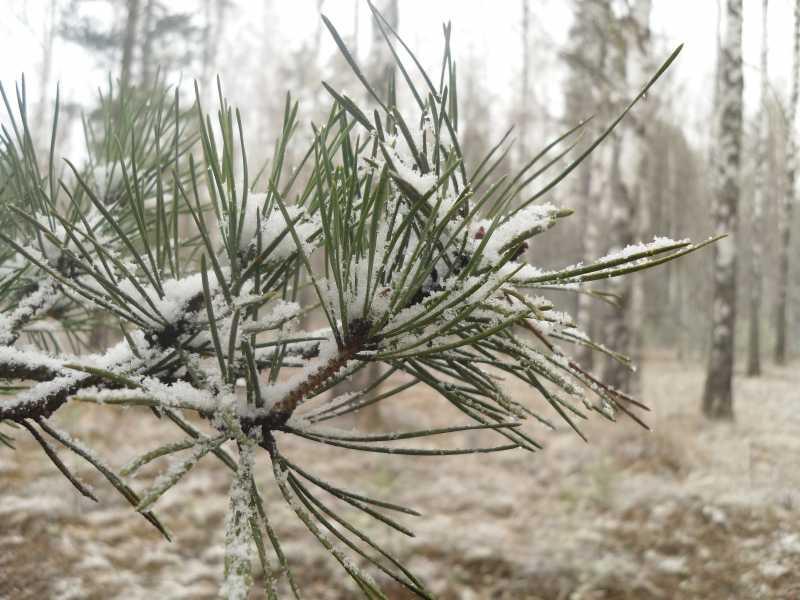 9)Воскресенье в Брянском лесу