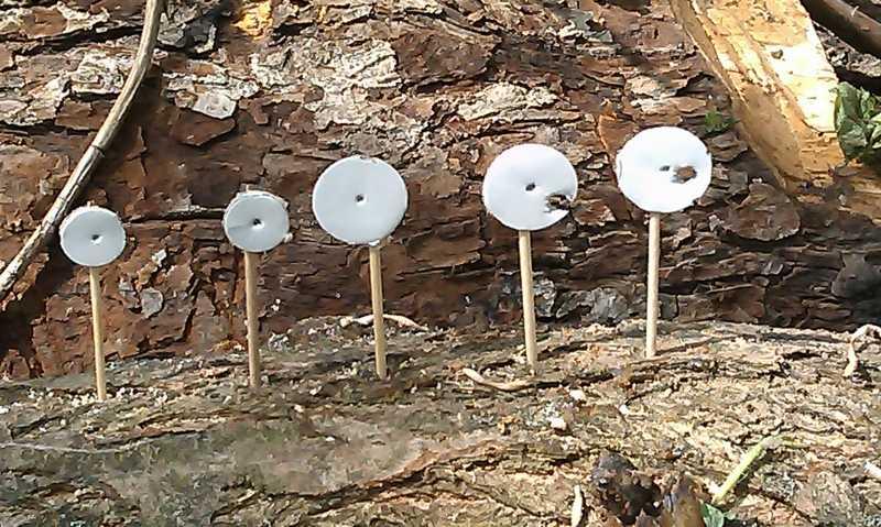 15)Праздничные стрелялки