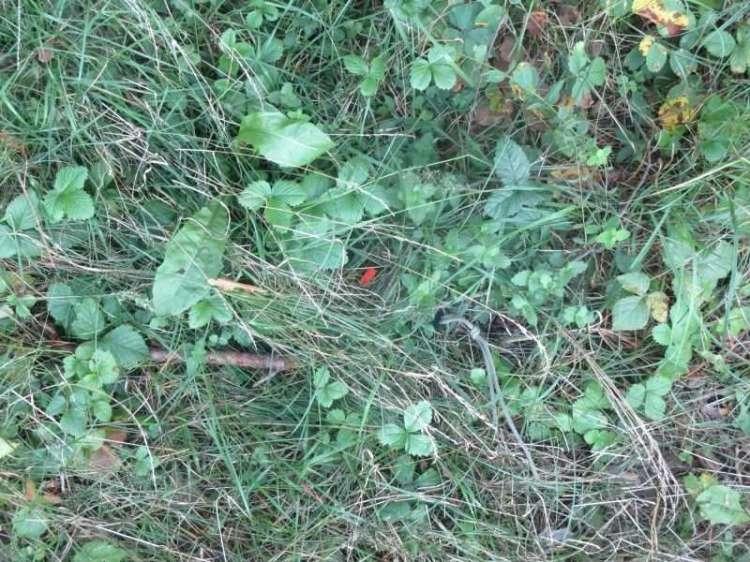 5)Как найти нож в траве?